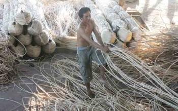 Seorang pekerja rotan sedang menarik-narik rotan yang sudah dibersihkan dan dikeringkan, beberapa waktu lalu.