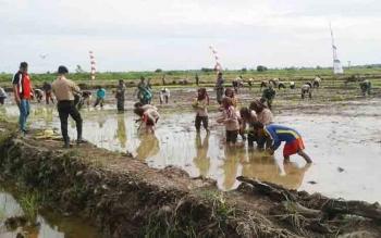 Pramuka ikut dalam kegiatan penaman padi serentak di Desa Natai Sedawak Kecamatan Sukamara.