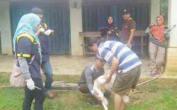 Petugas DKPP Kabupaten Sukamara memvaksin anjing masyarakat, beberapa waktu lalu.