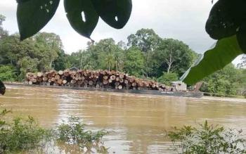Tongkang bermuatan ratusan potong kayu log yang akan dibawa perusahan HPH dari wilayah Kabupaten Gumas.