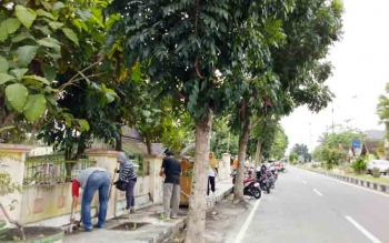Pohon pelindung di tepi jalan do Kota Sukamara, Kabupaten Sukamara.