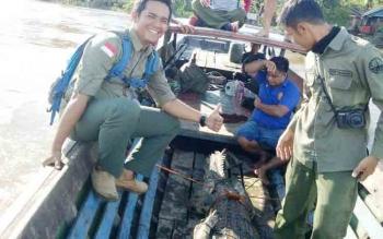 Petugas BKSDA Seksi Konservasi Wilayah (SKW) III Muara Teweh mengevakuasi buaya sapit ke Yayasan Kalaweit menggunakan klotok, Selasa (5/12/2017).
