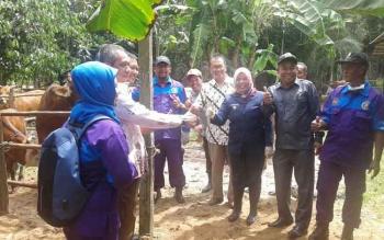 Bupati Kobar Nurhidayah saat mengikuti syukuran panet pedet atau anak sapi di Desa Pangkalan Tiga Kecamatan Pangkalan Lada
