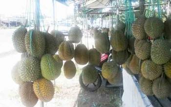 Buah durian yang dijual warga di tepi Jalan Trans Kalimantan wilayah Kereng Humbang Kasongan ini setiap harinya terus diserbu warga