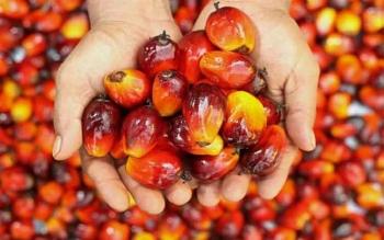 Permintaan Global Atas Produk Minyak Sawit Bakal Tinggi 2018