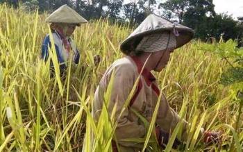 Sedikitnya Ada Empat Lahan Pertanian Potensial di Gunung Mas
