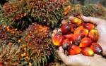 Malaysia Akui Ekspor Minyak Sawit ke UE Terus Merosot