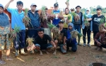 Tingkat Keberhasilan Pertanian Bawang Merah di Barito Utara Capai 80 Persen