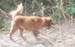Anjing Pelacak Dikerahkan Untuk Mencari Keberaaan M Rusli