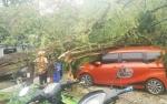 Waduh. Saat Hujan, Dua Mobil Tertimpa Pohon Tumbang