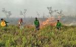 Api di Kawasan Danau Burung SM Sungai Lamandau Berhasil Dipadamkan