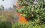 Lahan di Jalan Mahir Mahar Palangka Raya Terbakar