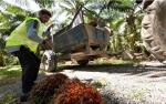Kredit Usaha Rakyat 2018 Bisa Untuk Replanting Sawit