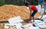 Perluasan Lahan Pertaninan Tunggu Keputusan Final Kementerian Pertanian