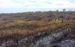 Tidak Ada Laporan Kebakaran Ratusan Hektare Lahan di Desa Babirah