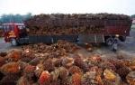 GAPKI: Produksi Kedelai Pengaruhi Ekspor Sawit RI