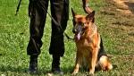 Anjing Pelacak Polda Kalteng Diterjunkan Untuk Cari Keberadaan  Rusli