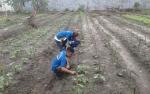Rutan Palangka Raya Juga Bina Napi Berkebun