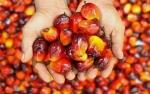 Produksi Sawit Meningkat, Pemerintah Perlu Cari Pasar Ekspor Barv