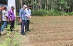 Bupati Nadalsyah Kunjungi Desa Nihan Hulu Lihat Pertanian Bawang Merah