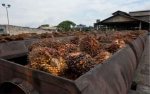 Malaysia Gandeng Belanda Garap Produk Hilir Sawit