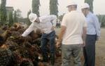 Dubes Jerman untuk Indonesia Tak Setuju Larangan Impor CPO