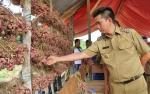 Nadalsyah Berharap Barito Utara Jadi Penyuplai Bawang Merah di Kalteng