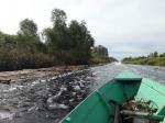 BOS Mawas Resahkan Illegal Logging di Kawasan Sungai Mantangai