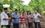 Litbang Palangka Raya Ajak Anggota DPRD Malang Lihat Kebun Pepaya Milik Bapak Slamet