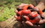 Indeks Saham Sektor Perkebunan Potensi Bertumbuh