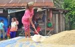 Pemkab Targetkan Produksi Beras Siam Epang Paling Tinggi di Kotim