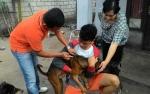 Kasi Kesehatan Hewan Turun Langsung Suntik Rabies