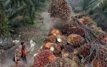 Malaysia Juga Bela Indonesia Terkait Pelarangan Impor CPO