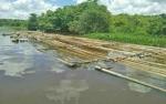 Ratusan Kayu Ilegal Dimilirkan di Sungai Katingan, Dua Warga Diamankan