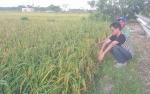 Ini Pesan Bupati Murung Raya Kepada Petani Tanah Siang Selatan