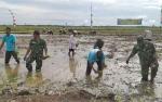 Pola Tanam dan Cuaca Pengaruhi Hasil Produksi Padi di Sukamara