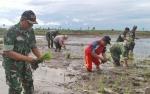 300 Hektare Sawah di Sukamara Terendam Banjir Selama 2017