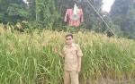 Barito Utara Dapat Jatah Perluasan Lahan Padi 20.000 Hektare