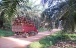 Sampoerna Agro Tetap Yakin Target Kuartal I Dapat Tercapai