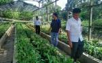 Dinas Pertanian Terus Kembangkan Balai Benih Tanaman Pangan Dan Hotikultural