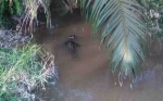 Diduga Ada Habitat Buaya pada Dua Sungai di Seruyan