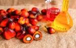 Cuaca di India Buka Peluang Kenaikan Impor Minyak Sawit