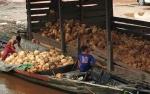 Petani Keluhkan Harga Kelapa Murah