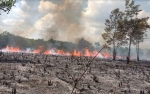 Pembakar Lahan di Palangka Raya Kini Jadi Tersangka