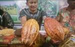 Poktan Liang Buah Dapat Bantuan 50.000 Bibit Kakao