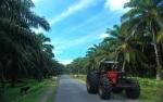 Bakrie Plantations Bidik Produksi Sawit Capai 540.000 Ton