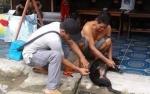 Masyarakat Gunung Mas Diminta Proaktif Menyerahkan Hewan Peliharaan Untuk Divaksin Rabies