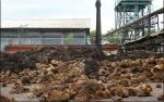 PTPN V Olah Limbah Sawit Jadi Energi Terbarukan