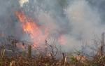 Kotim Tingkatkan Kesiapsiagaan Kebakaran Hutan dan Lahan
