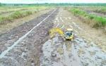 Dinas Pertanian Barito Utara Butuh Tambahan Alat Berat untuk Perluasan Areal Tanam Baru